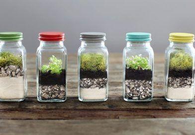 Decoración con plantas de interior: 10 ideas para tu casa