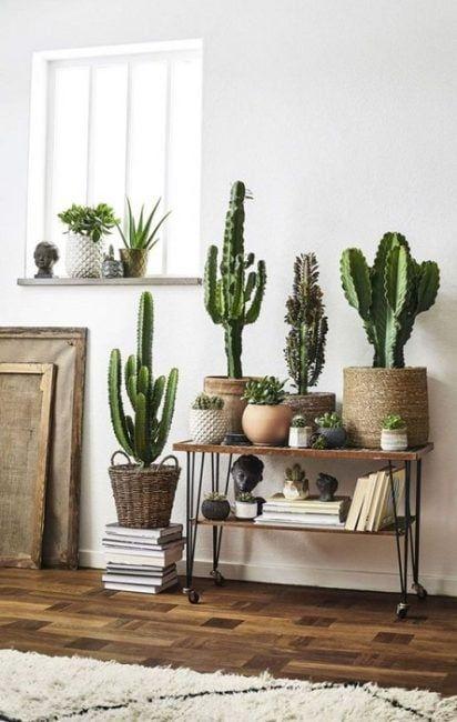 Cactus en cestas de mimbre