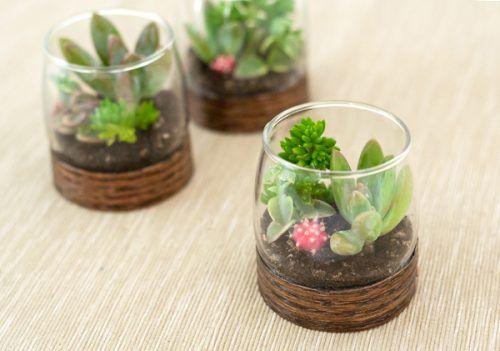 decoración con plantas de interior - vaso de cristal 1