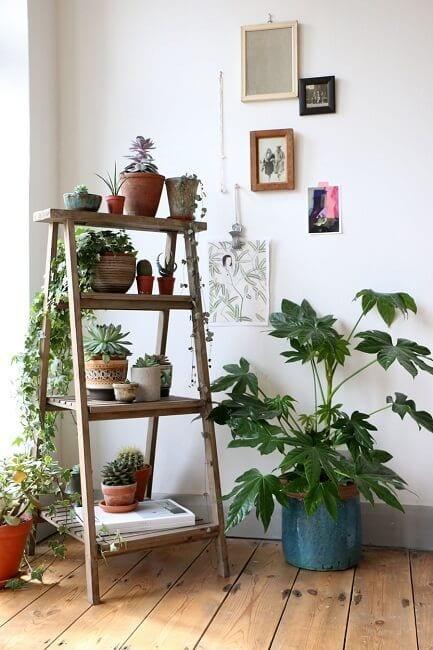 Decoración con plantas y una escalera de madera