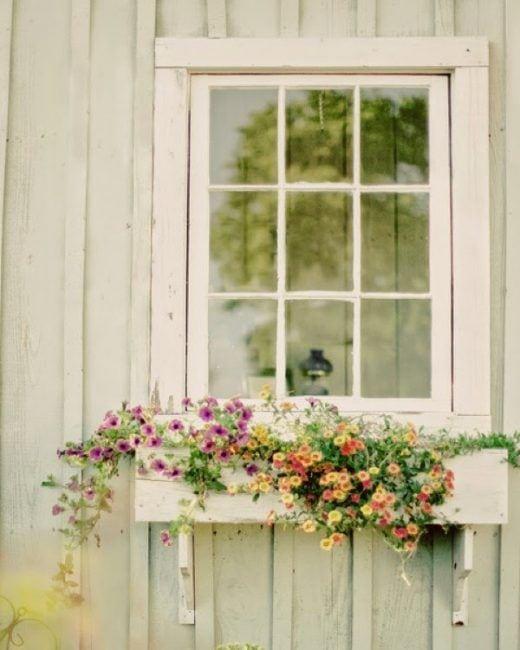 Flores colgando de la ventana