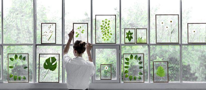 Hojas de plantas para poner en la ventana