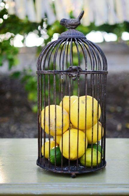 Jaula de pájaros convertida en frutero