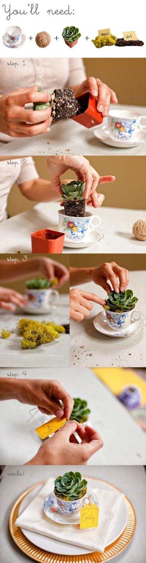 Cactus en una taza de té