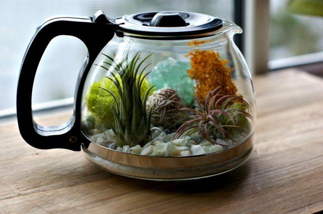 Cafetera con plantas