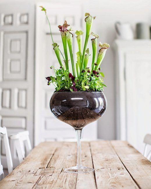 Planta en una copa de vino