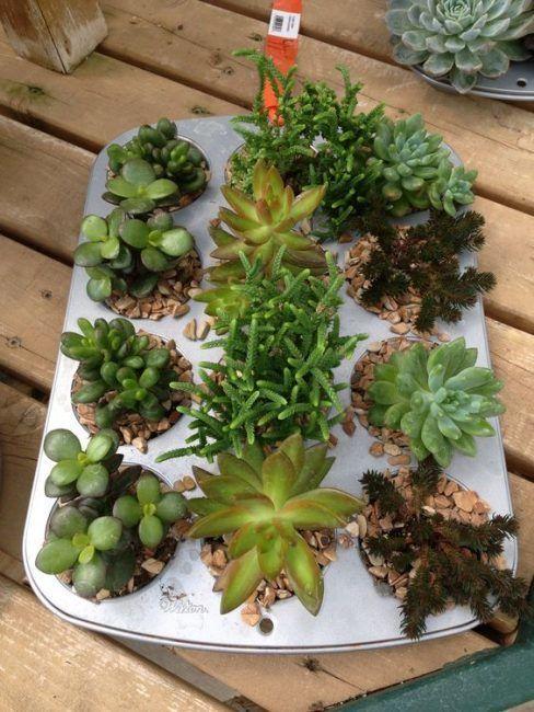 Plantas en moldes para cupcakes