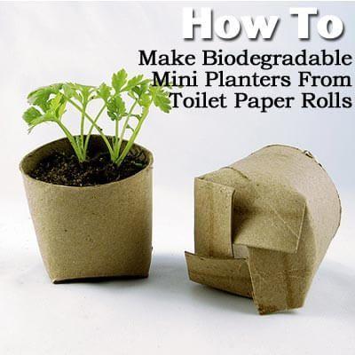 Semillero con un tubo de papel higiénico