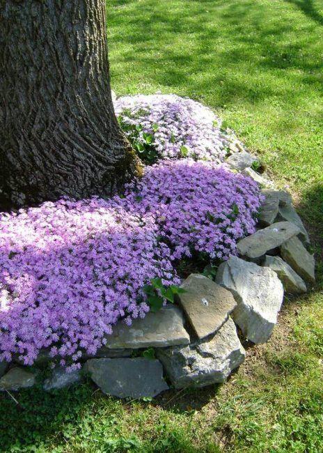 Piedras en la base de un árbol