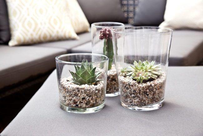 Plantas en jarrones con piedras