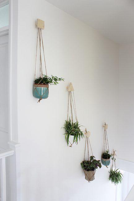 Plantas colgantes para pasillos