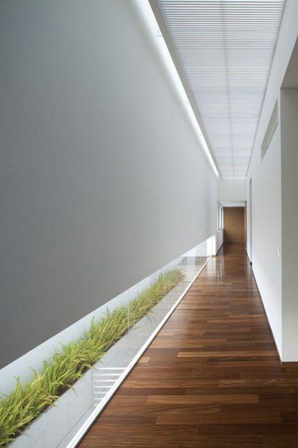Plantas para el pasillo o corredor