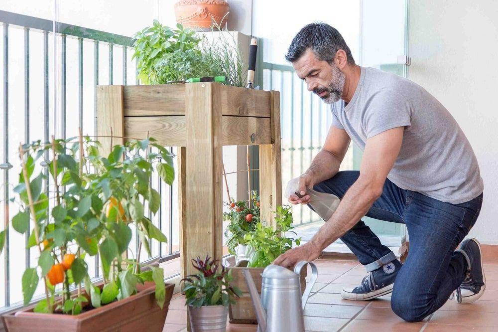 Plantas en terrazas acristaladas