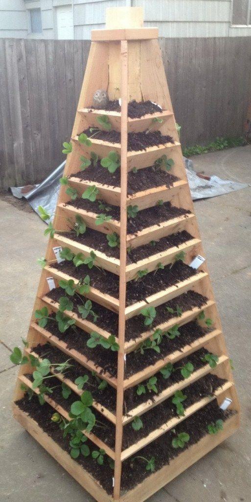 pirámide de cultivo